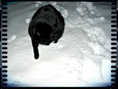 """""""I try to walk on snow without touching it."""""""