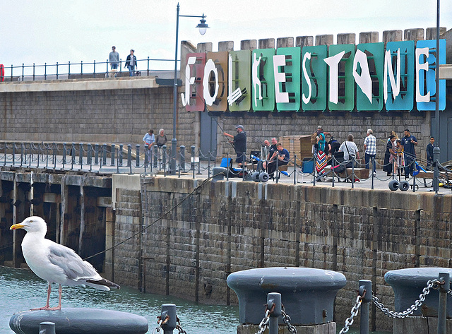 Gull and folk at Folkestone
