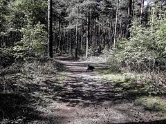 Walking a woodland track - H.A.N.W.E