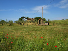Memories of Tuscany: Just 'Blowing in the Breeze'