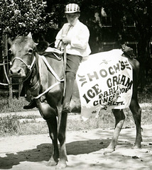 Hoch's Ice Cream Parlor Cow, Patriotic and Industrial Parade, Newburg, Pa., July 3, 1909 (Cropped)