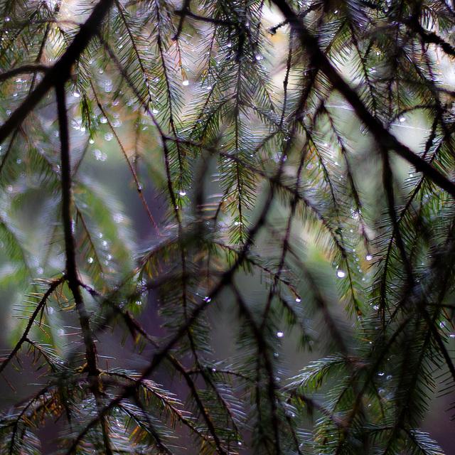Up Through Trees 063