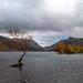 The lone tree, Lake Padarn.12jpg