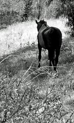 the quiet horse