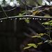 water drop branch