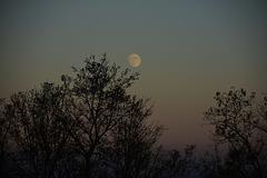 Dijon au claire de lune