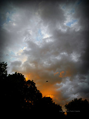 Free Bird and Sunset Clouds