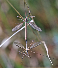 Unbekannte, sehr kleine Insekten