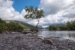 The lone tree, Lake Padarn5