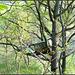 Tree People (spring)