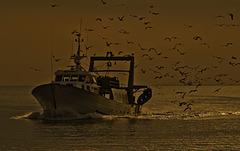 Retour de pêche................clic sur l'image.