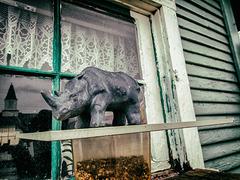 Rhino in the Window