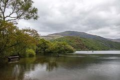 The lone tree, Lake Padarn10