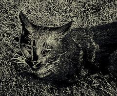Cat etching