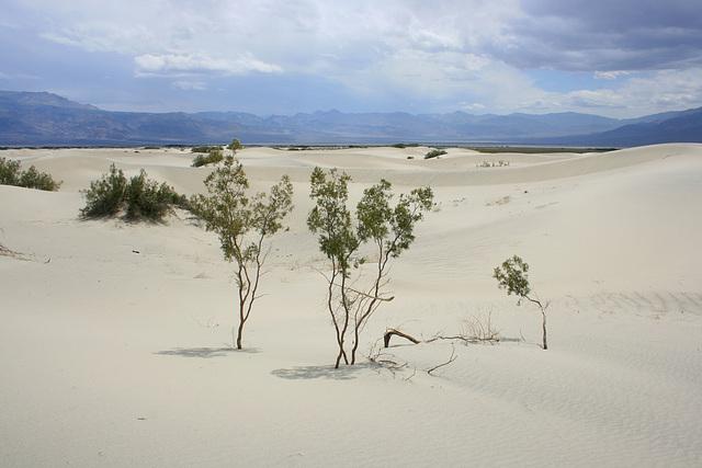 Saline Valley dunes