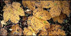 """""""Herbstschönheit"""""""
