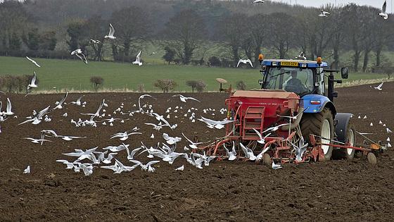 Bird-a-Tractor