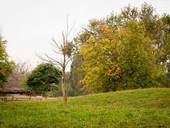 Zoo landscape (2)