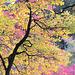 Jewel Tones In Autumn