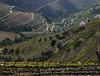 The Douro Valley   -   Port  Wine
