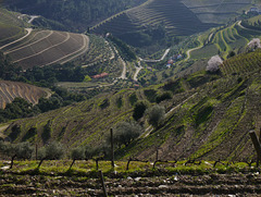 The Douro Valley   -   Port  Wine