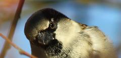 Sparrow Insight