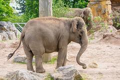 Zoo set 4