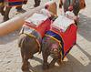 Amer- Amber Fort- Elephants Returning Empty