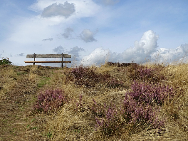 The heather on the hill