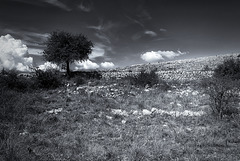 Plateau de Saint Barnabé.