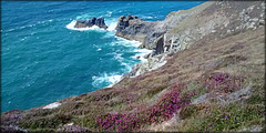 St Agnes Head and heather, for Pam.