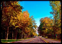 Toujours en automne...