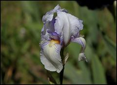 Iris Ma Mie (2)