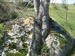 Im Naturschutzgebiet Vilaüt