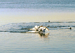 Chew Valley Lake (1)