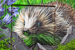 Hedgehog Mural