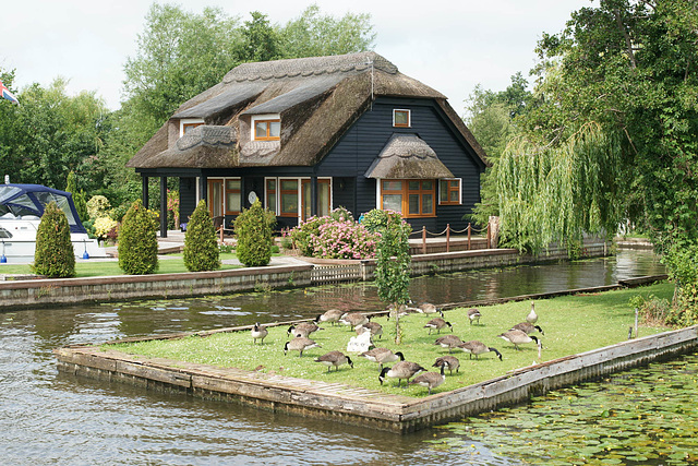 Geese By The Bure