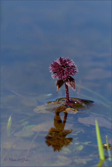 In the Pond....
