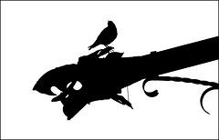 .....blackbird has spoken