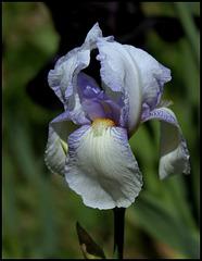 Iris Ma Mie (3)