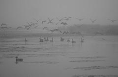flight in the fog