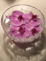 salvaged orchids 2