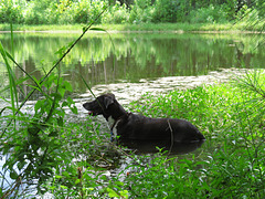 Garip lying in the pond