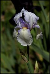 Iris Ma Mie (4)