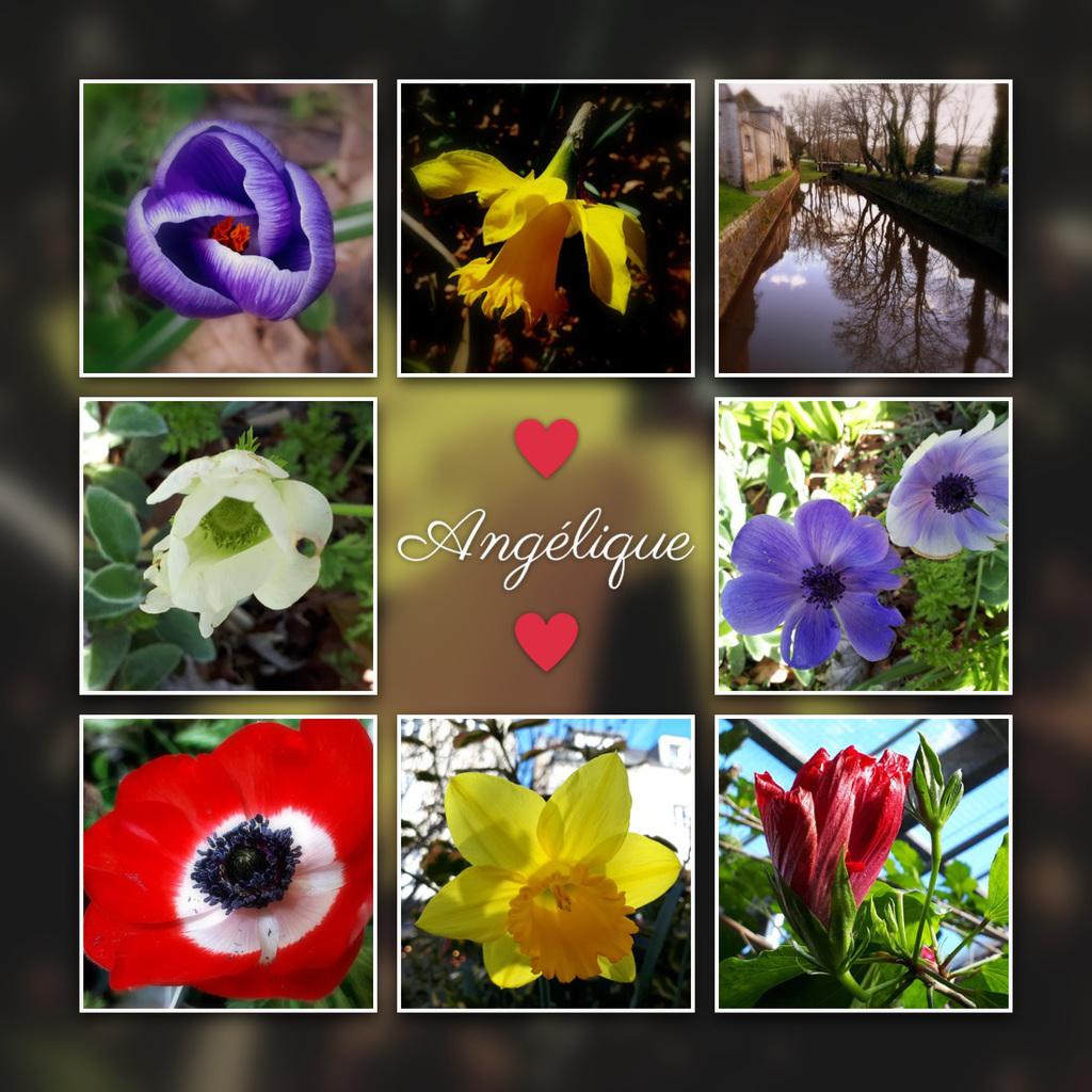 Un Bouquet de printemps avant l'heure ..........2021