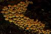 Procession de champignons