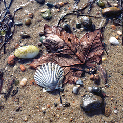 beached leaf