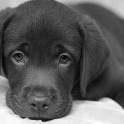 animales-perros-perro-triste