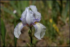 Iris Ma Mie (6)