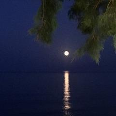 In pale moonlight....